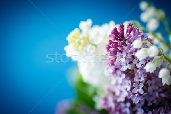 Virágcsokor gyönyörű lila orgona kék virág Stock fotó © Peredniankina