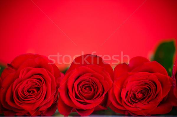 Hermosa rosas rojas rojo flor amor cumpleanos Foto stock © Peredniankina