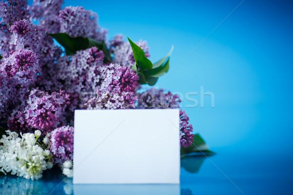 букет красивой Purple сирень синий цветок Сток-фото © Peredniankina