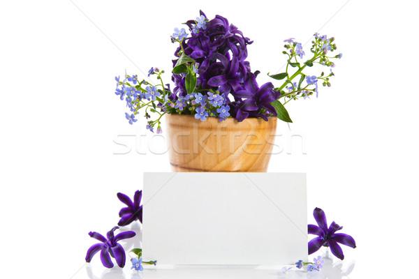 Jácint gyönyörű virágok fehér természet háttér Stock fotó © Peredniankina