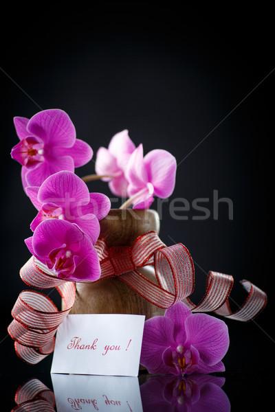 Gyönyörű ág hála fekete virág virágok Stock fotó © Peredniankina