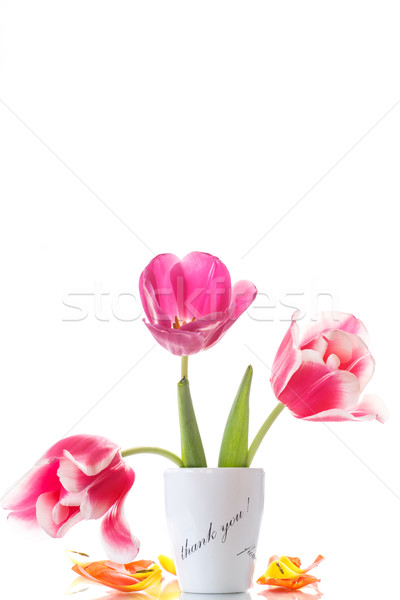 Belo tulipas vaso gratidão branco primavera Foto stock © Peredniankina