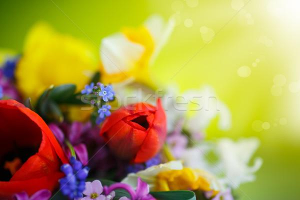 Foto stock: Belo · buquê · flores · da · primavera · verde · primavera · sol