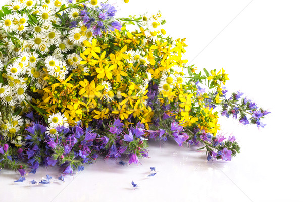 Buquê belo branco flor jardim Foto stock © Peredniankina