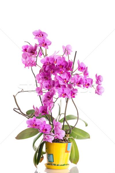 Stock fotó: Gyönyörű · virágok · fehér · szeretet · születésnap · szépség