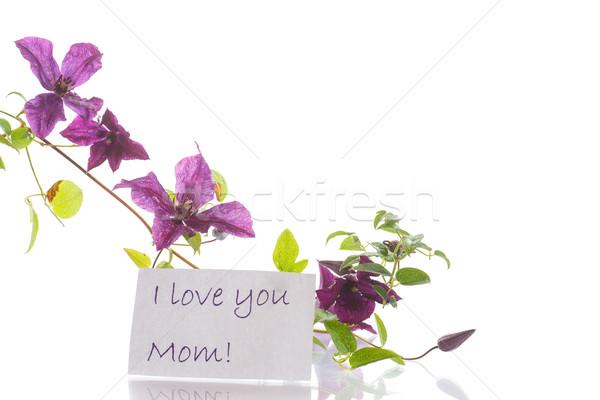 Gyönyörű virágzó tavasz természet levél kert Stock fotó © Peredniankina