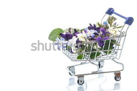 spring flowers hyacinth in the truck  Stock photo © Peredniankina