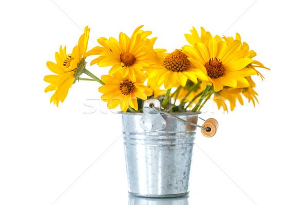 Köteg citromsárga százszorszép virágok fehér tavasz Stock fotó © Peredniankina