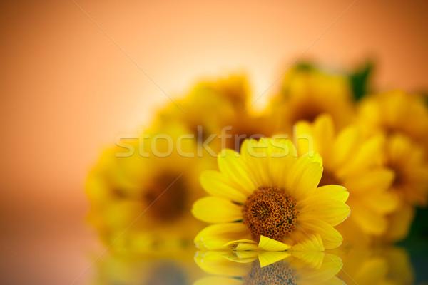 Foto stock: Amarillo · Daisy · flores · naranja · flor