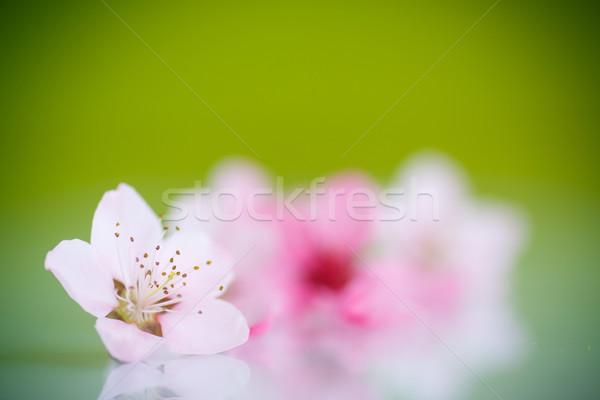 Pêssego rosa flores verde natureza fruto Foto stock © Peredniankina