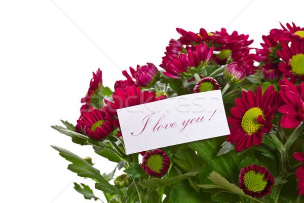 Hermosa púrpura crisantemo declaración amor boda Foto stock © Peredniankina