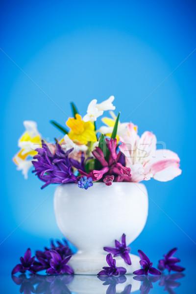Belo buquê flores da primavera azul primavera mãe Foto stock © Peredniankina