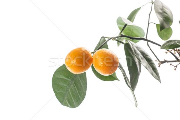 kumquat Stock photo © Peredniankina
