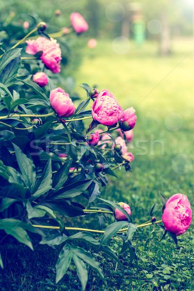Bahçe filtre etki eski fotoğrafları Stok fotoğraf © Peredniankina