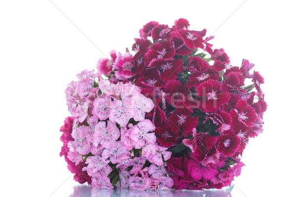 Brillante ramo primavera amor hoja cumpleanos Foto stock © Peredniankina