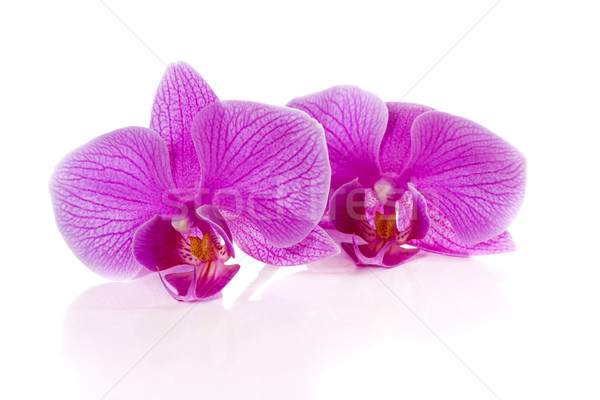 Phalaenopsis flowers Stock photo © Peredniankina