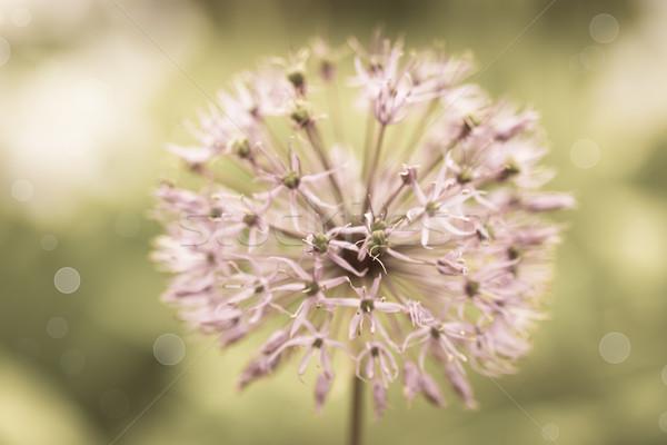 Stock fotó: Holland · dekoratív · íj · elmosódott · virágok · naplemente