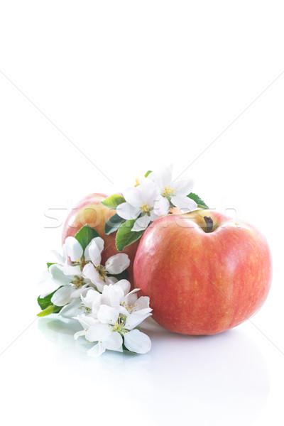 Appel bloem rijp bloemen witte boom Stockfoto © Peredniankina