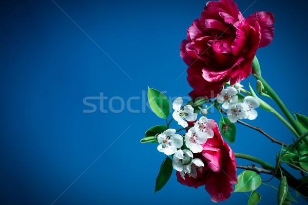 Voorjaar tulpen kers bloemen Blauw appel Stockfoto © Peredniankina