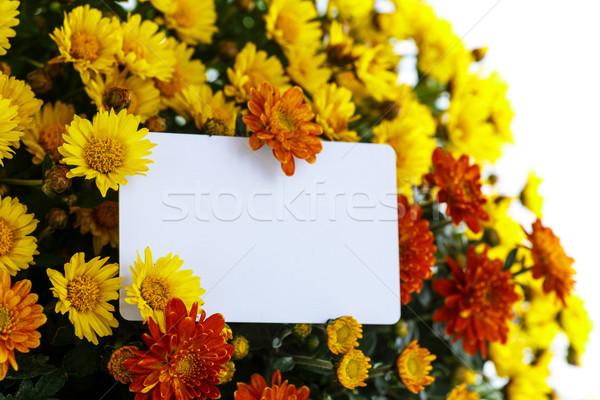 Hermosa ramo brillante flores naturaleza belleza Foto stock © Peredniankina