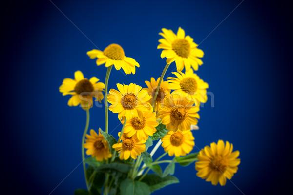 美しい 黄色の花 青 光 庭園 母親 ストックフォト © Peredniankina