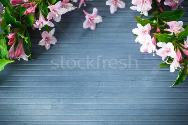 Weigel beautiful pink flowers Stock photo © Peredniankina