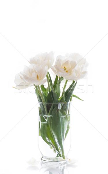 Fehér tulipánok gyönyörű víz tavasz természet Stock fotó © Peredniankina