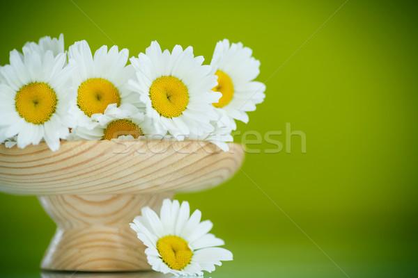 Kamilla gyönyörű virágcsokor fehér százszorszépek zöld Stock fotó © Peredniankina