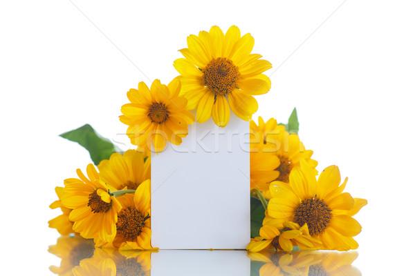 Güzel buket sarı papatyalar beyaz çiçek Stok fotoğraf © Peredniankina