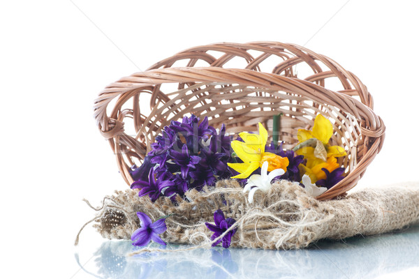 Primavera jacinto blanco naturaleza fondo Foto stock © Peredniankina
