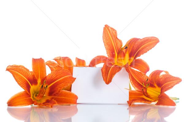 Stockfoto: Oranje · lelie · mooie · witte · bloem · tuin