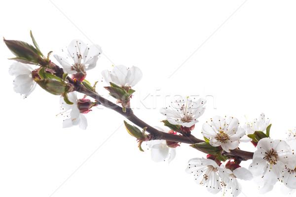 Ramo primavera projeto fundo quadro Foto stock © Peredniankina