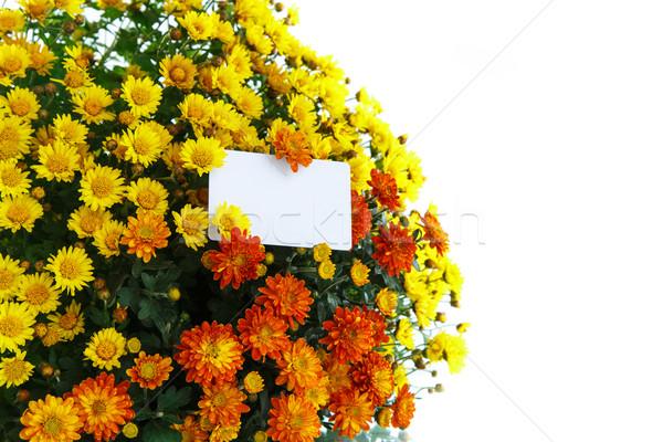 Mooie boeket heldere bloemen natuur schoonheid Stockfoto © Peredniankina