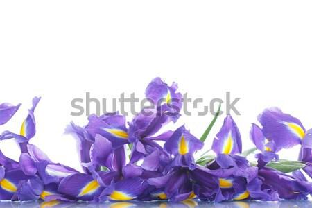 Buquê belo flores flor mãe azul Foto stock © Peredniankina