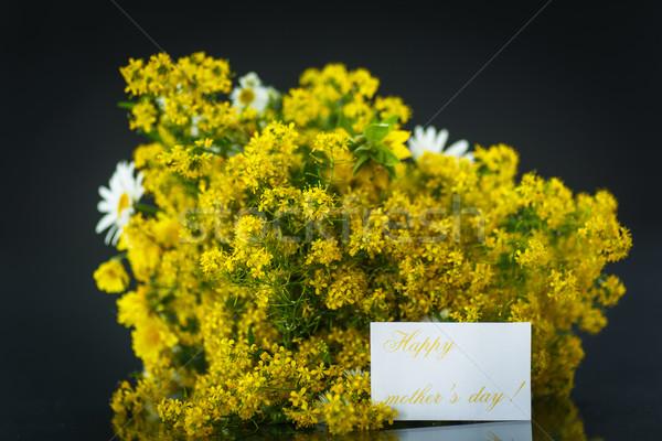 Buquê flores silvestres mamãe preto flores primavera Foto stock © Peredniankina