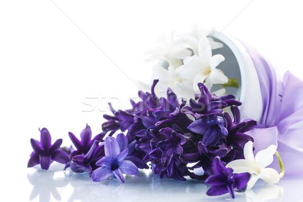 Jácint gyönyörű tavaszi virágok fehér húsvét szeretet Stock fotó © Peredniankina