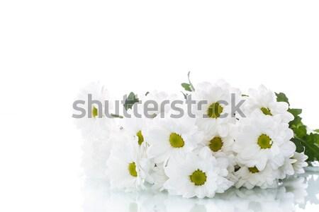 Foto stock: Blanco · crisantemo · flores · belleza · verano