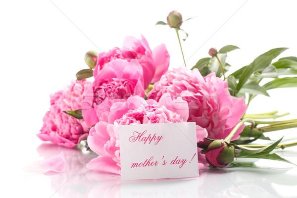 beautiful blooming peonies Stock photo © Peredniankina
