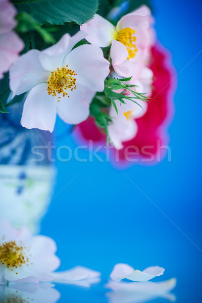 Stock photo: bouquet of beautiful wild roses