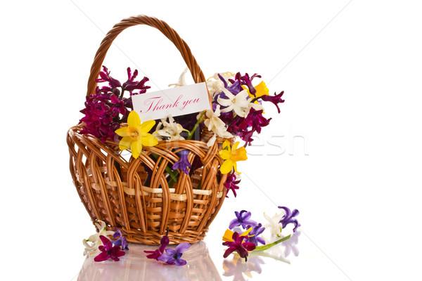 Jácint virágok hála fehér természet háttér Stock fotó © Peredniankina