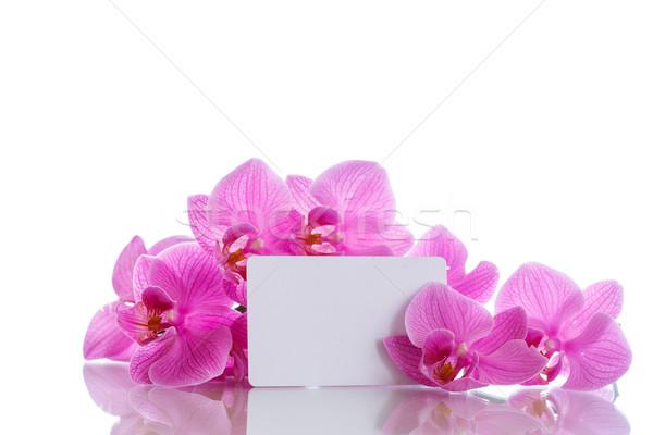 sch nen lila blumen wei fr hling hintergrund stock foto natalia peredniankina. Black Bedroom Furniture Sets. Home Design Ideas