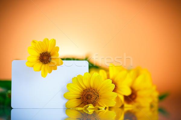 Sarı papatya çiçekler turuncu çiçek Stok fotoğraf © Peredniankina