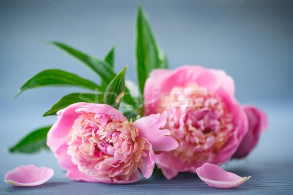 Belo rosa flor primavera madeira fundo Foto stock © Peredniankina