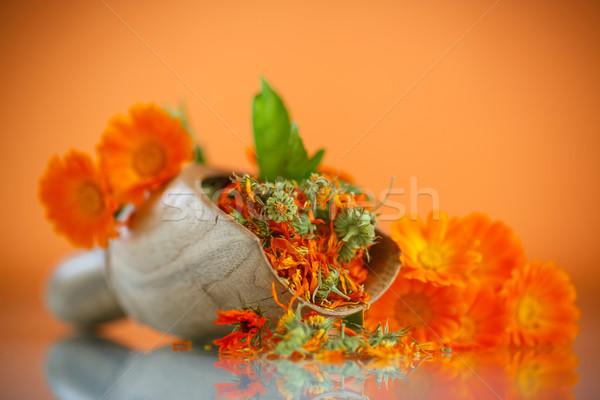 Secas flores laranja flor natureza saúde Foto stock © Peredniankina