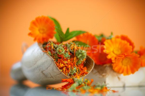 Secas flores laranja flor médico natureza Foto stock © Peredniankina