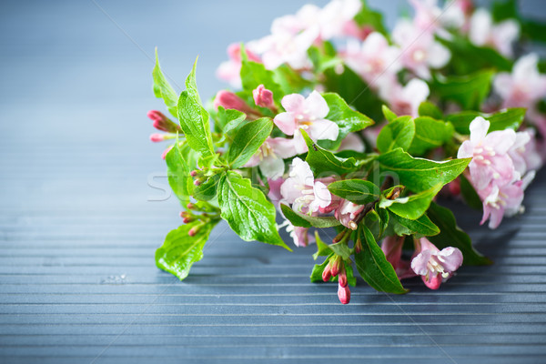 Stock photo: Weigel beautiful pink flowers