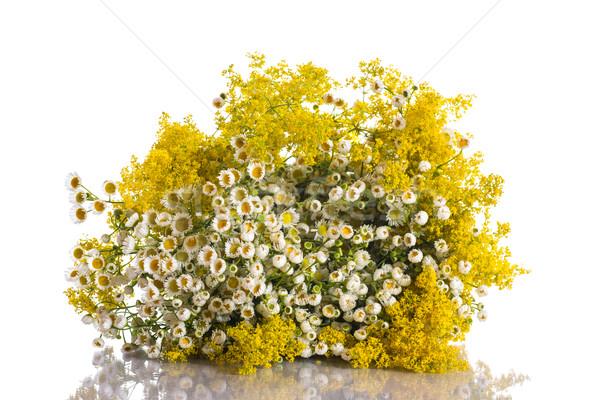 Verano ramo flores silvestres blanco naturaleza hoja Foto stock © Peredniankina