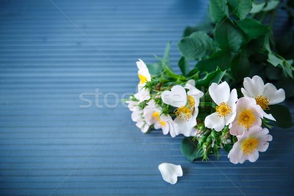 bouquet of wild roses Stock photo © Peredniankina