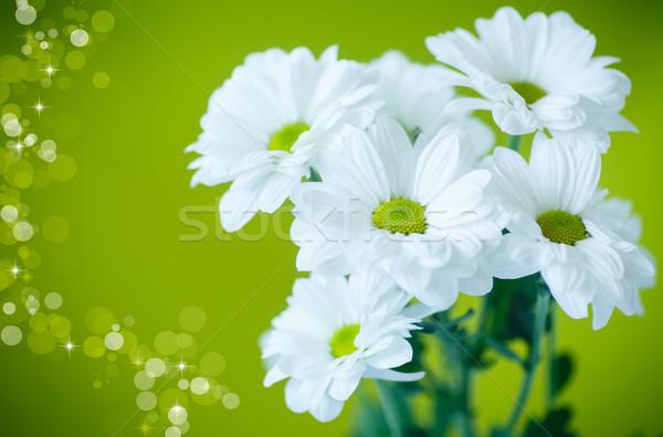 Gyönyörű fehér virágok krizantém zöld virág szépség Stock fotó © Peredniankina