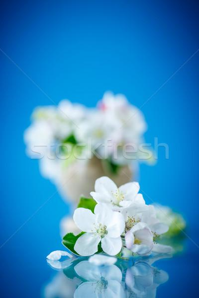 Stok fotoğraf: Bahar · elma · ağacı · mavi · çiçek · çiçekler